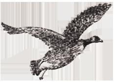 contact bird